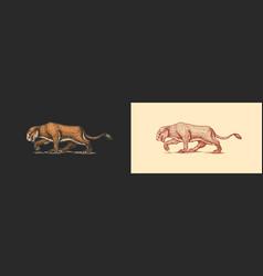 European cave lion panthera spelaea extinct vector