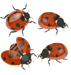 ladybirds set isolated on white background image vector image
