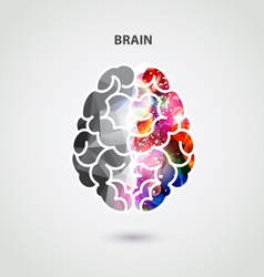 Left and right part of brain vector image