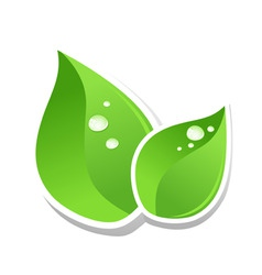Water drops on green leaf of a tree a vector illus vector