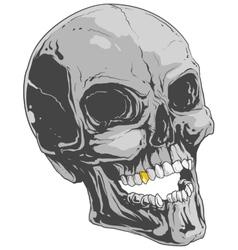Grey skull vector