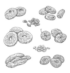 Nuts berries and dried fruits isolated sketches vector