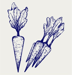 Carrot vegetable with leaves vector image vector image
