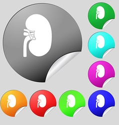 Kidney icon sign Set of eight multi colored round vector image vector image