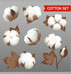 Cotton plant transparent realistic set vector