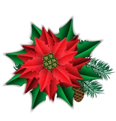 Poinsettia and fir branch with cone isolated on vector image
