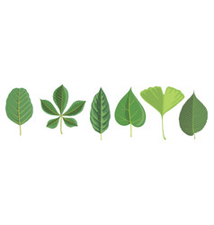 set tree leaves vector image