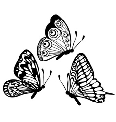 black and white butterfly isolated on white vector image