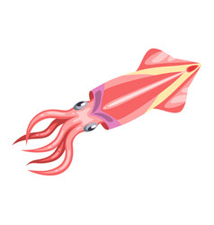 fresh squid isolated of seafood on vector image