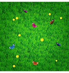 Background with grass flowers and butterflies vector image vector image
