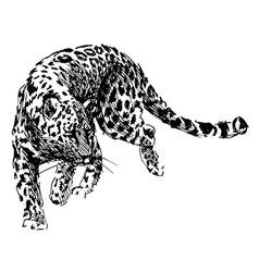 Hand sketch leopard vector