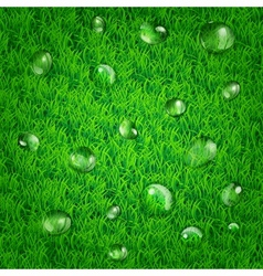 Background with grass and water drops vector