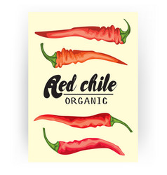 Cartoon chile pepper card ripe red vegetable vector