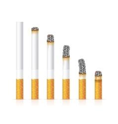 Realistic cigarette set different stages burn vector