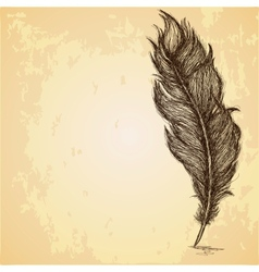 Sketch of the feather on grungy texture vector