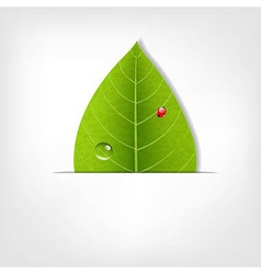 Eco Green Leaf Poster vector image vector image