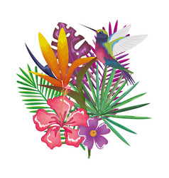 tropical and exotic garden with hummingbird vector image