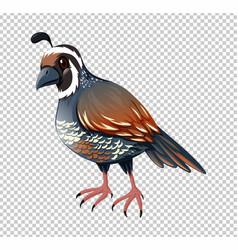 Wild quail on transparent background vector