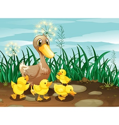 A duck and her ducklings near the grassland vector image vector image