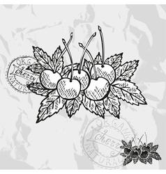 Hand drawn decorative cherry fruits vector image