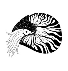 nautilus coloring book black and white hand vector image