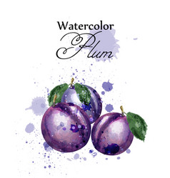 plum watercolor fruits sweet label vector image