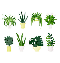 popular indoor plants on white background vector image