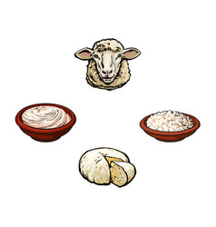 Sketch sheep head cottage cheese sour cream vector