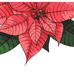 Poinsettia flower background for invitation card vector image vector image