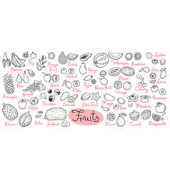 set drawings fruits for design menus recipes vector image