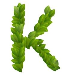 Letter K of green leaves alphabet vector image