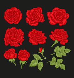 big set with red rose flowers and leaves in vector image