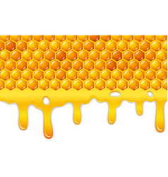 cartoon honeycomb with honey dripping vector image