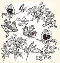 collection of decorative hand drawn flowers vector image