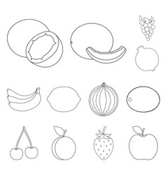 different fruits outline icons in set collection vector image