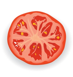 fresh tomato piece vector image