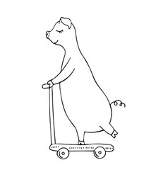 monochrome hand-drawn pig riding on a scooter vector image