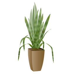 areca palm with pot vector image