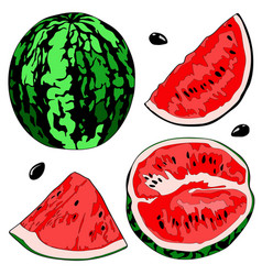 a watermelon half vector image