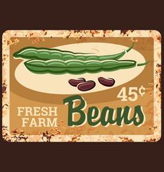 beans rusty metal plate kidney green vegetables vector image