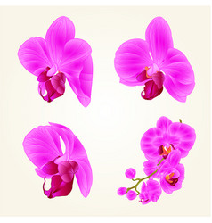 beautiful purple orchid flowers closeup vector image
