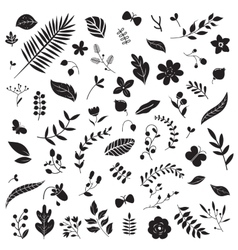 Botanical elements set vector image