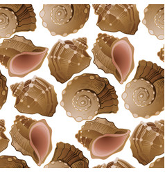Graphic seashells pattern vector