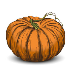Pumpkin vegetable hand drawn vector