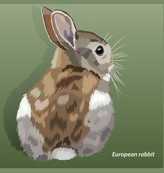 realistic european rabbit isolated vector image