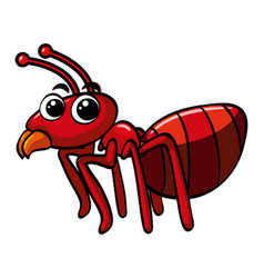 Red ant on white background vector
