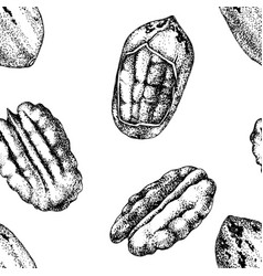 seamless pattern with hand drawn pecan nuts vector image
