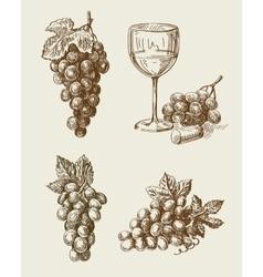 grape doodle vector image
