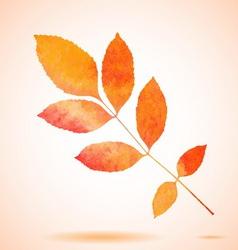 Orange watercolor painted ash tree leaf vector image vector image