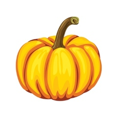 Pumpkin on a white background vector image vector image